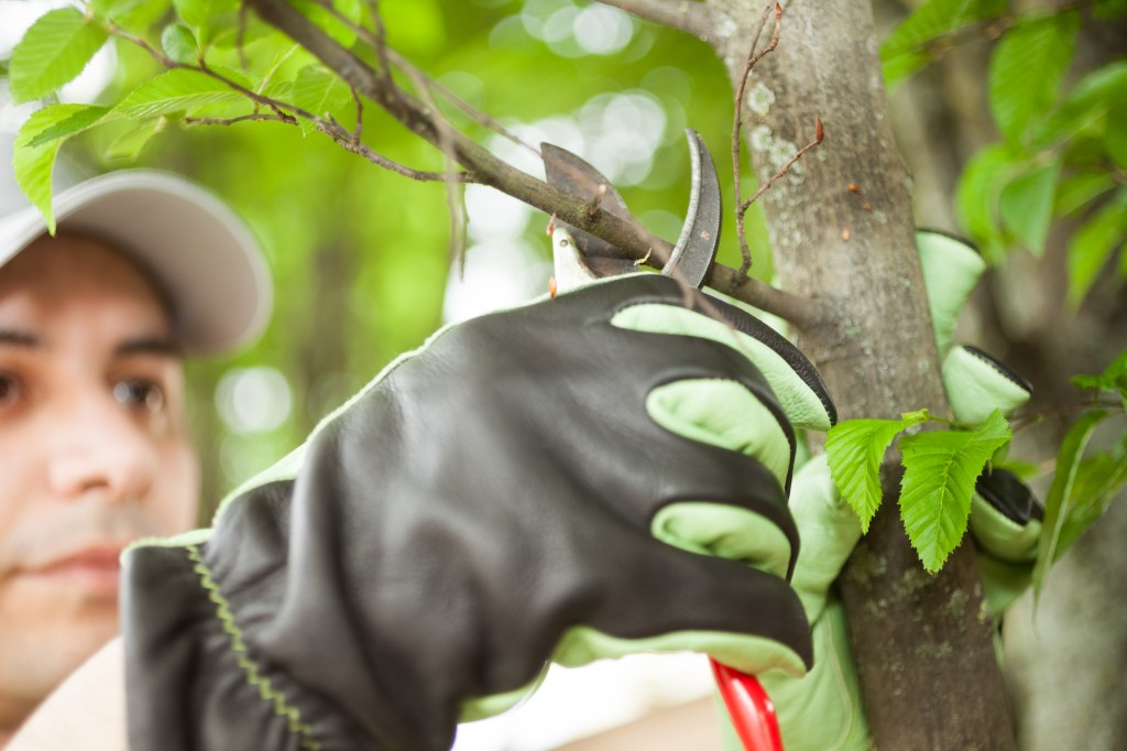 OSHA's Latest Regulatory Agenda: Tree Care